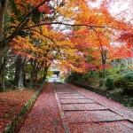 京都の紅葉で山科区の穴場を厳選!毘沙門堂・随心院・勘修寺!