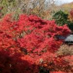京都の紅葉で北区の穴場を厳選!等持院・光悦寺・大徳寺!