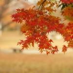 京都の紅葉で上京区の穴場を厳選! 京都御所・妙覚寺・カフェ庭園!