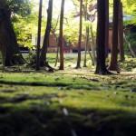 京都の紅葉で西京区の穴場を厳選!勝持寺・大原野神社・地蔵院!