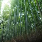 京都女子旅のおすすめコース!縁結びスポット鈴虫寺のお守りの効果とは?