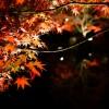 京都の紅葉で亀岡市の穴場を厳選!神蔵寺・鍬山神社・出雲大神宮!