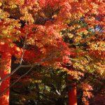京都の紅葉で右京区の穴場を厳選④!清涼寺・大河内山荘庭園・車折神社!