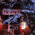 京都の桜 おすすめの穴場撮影スポット 北区編 今宮神社・上品蓮台寺・建勲神社