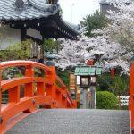 京都の桜 おすすめの穴場撮影スポット|中京区編|神泉苑・京都地方裁判所