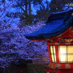 京都の桜 おすすめの穴場撮影スポット 伏見区編 伏見稲荷大社・城南宮・墨染寺
