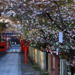 京都の桜 おすすめの穴場撮影スポット|右京区編②|車折神社・梅宮大社・春日神社