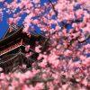 京都の桜 おすすめの穴場撮影スポット|伏見区編②|瑞光寺・藤森神社・伏見桃山城