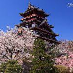 京都で花見を家族で楽しめるスポット3選!京都府立植物園・伏見桃山城・宇治市植物園