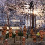 京都の桜 おすすめの穴場撮影スポット 中京区編② 六角堂・壬生寺
