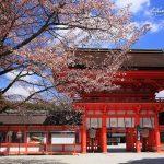 京都の桜 穴場のおすすめ撮影スポット|左京区編⑤|下鴨神社・圓光寺・京都府立植物園
