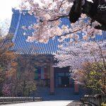 京都の桜 おすすめの穴場撮影スポット|東山区編|泉涌寺・智積院・妙法院