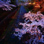 京都 桜の名所|左京区編|南禅寺・岡崎疏水・蹴上インクライン