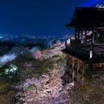 京都 桜の名所|東山区編|清水寺・高台寺