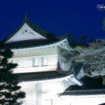 京都 桜の名所|上京区・中京区編|京都御苑・二条城