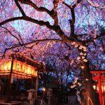 京都の夜桜 穴場のライトアップスポット7選!見頃や見どころ情報!