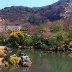 京都 桜の名所|右京区編②|天龍寺・嵐山渡月橋・嵯峨野トロッコ列車