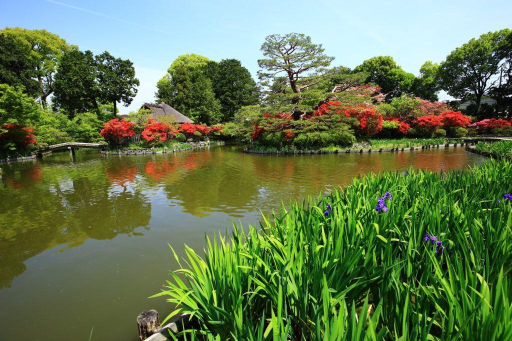 20Kyoto-Umenomiya-taisya-shrine-azalea-Kirisima-tsutsuji