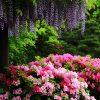 京都でゴールデンウィークに花が見頃のおすすめ名所20選!全解説!