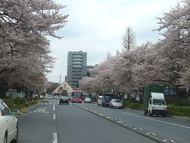 638px-Kunitachi_stn_cherry