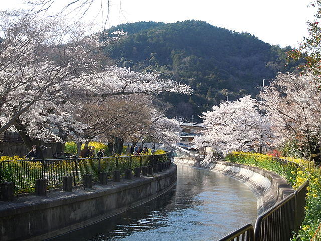 Yamasina_Lake_Biwa_Canal_and_Cherry_Blossom_Viewing_(5)