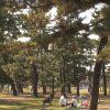 浜寺公園の駐車場で安い料金の周辺おすすめ地図ガイド&全リスト!
